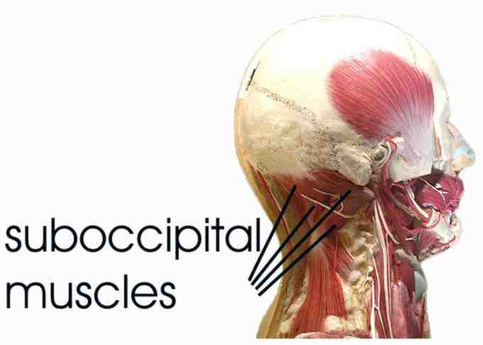 deep neck flexor exercises pdf